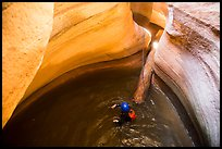 Canyoneer swims in pool with golden light, Pine Creek Canyon. Zion National Park, Utah ( color)
