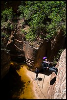 Rappel along cliff, Upper Left Fork. Zion National Park, Utah ( color)