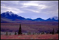Alaska Range at dusk from near Savage River. Denali National Park, Alaska, USA. (color)