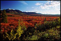 Alaska Range and tundra from near Savage River. Denali National Park, Alaska, USA. (color)