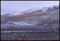 Dusting of snow and tundra fall colors  near Savage River. Denali National Park, Alaska, USA.