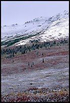 Dusting of fresh snow and autumn colors on tundra near Savage River. Denali National Park, Alaska, USA. (color)