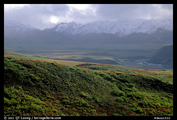 Tundra and Alaska Range near Sable pass. Denali National Park (color)