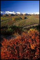 Berry plants, braided rivers, Alaska Range in early morning from Polychrome Pass. Denali National Park, Alaska, USA.