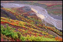 Tundra in fall color and braided river below, from Polychrome Pass. Denali National Park, Alaska, USA.