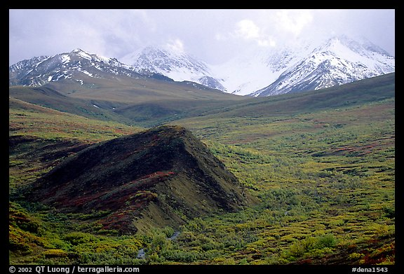 Hills and mountains near Sable Pass. Denali National Park, Alaska, USA.