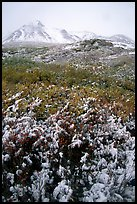 Fresh snow and Polychrome Mountains. Denali National Park, Alaska, USA.