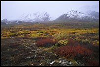 Tundra in autumn color and Polychrome Mountains in fog. Denali National Park, Alaska, USA.