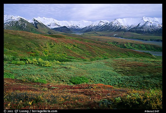 Tundra and Alaska Range near Eielson. Denali National Park (color)