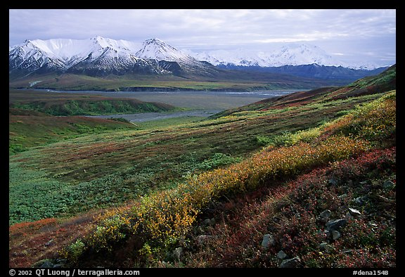 Tundra, Alaska Range, and Denali near Eielson. Denali National Park (color)