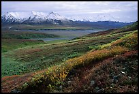 Tundra, Alaska Range, and Denali near Eielson. Denali National Park, Alaska, USA.