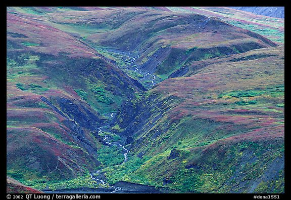 River cut in tundra foothills near Eielson. Denali National Park, Alaska, USA.