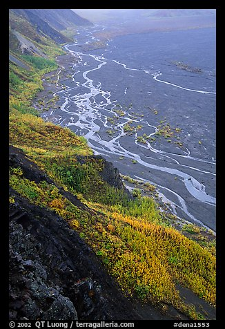 Aspen trees and braids of the Mc Kinley River near Eielson. Denali National Park, Alaska, USA.