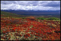 Tundra and Alaska Range near Wonder Lake. Denali National Park, Alaska, USA. (color)