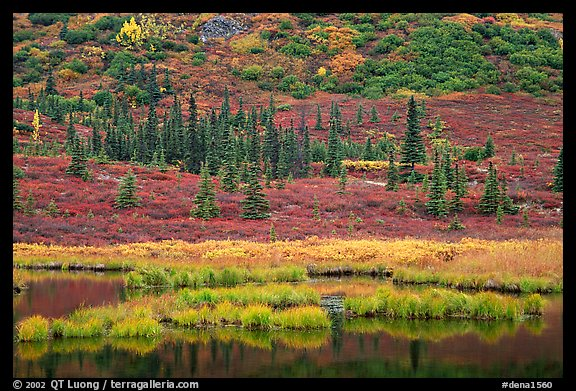 Pond, spruce trees and tundra near Wonder Lake. Denali National Park (color)