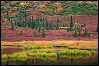 Pond, spruce trees and tundra near Wonder Lake. Denali National Park, Alaska, USA.