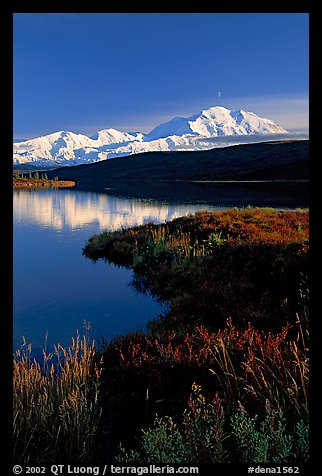 Mt Mc Kinley above Wonder Lake, evening. Denali National Park, Alaska, USA.
