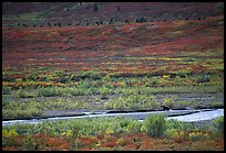 Grizzly bear on distant river bar in tundra. Denali National Park, Alaska, USA.