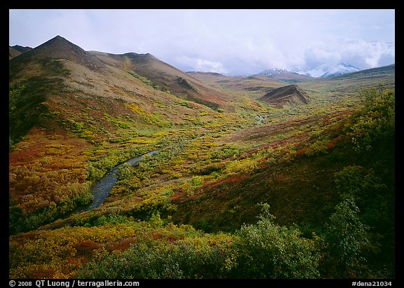 Gentle valley and river with low vegetation. Denali National Park, Alaska, USA.