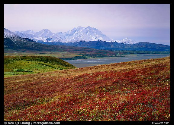 Tundra and Mt Mc Kinley from  Eielson. Denali  National Park (color)