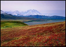 Tundra and Mt Mc Kinley from Eielson. Denali National Park, Alaska, USA.