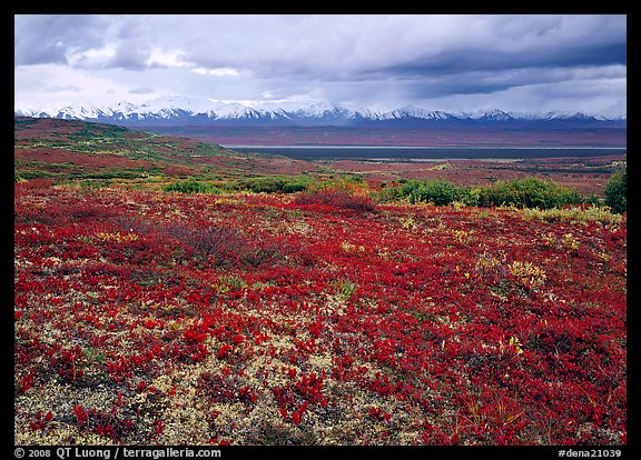 Red tundra flat and Alaska Range in the distance. Denali National Park, Alaska, USA.