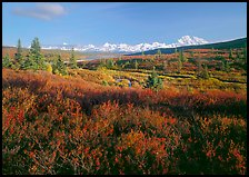 Tundra in autumn colors and snowy mountains of Alaska Range. Denali National Park, Alaska, USA.