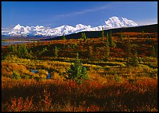 Tundra and Mt McKinley range, late afternoon light. Denali National Park, Alaska, USA.