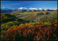 Alaska Range, braided rivers, and shrubs from Polychrome Pass, morning. Denali National Park ( color)