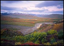 Tundra and braided rivers from Polychrome Pass, afternoon. Denali National Park, Alaska, USA.