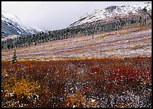 Fresh snow on tundra near Savage River. Denali National Park, Alaska, USA.