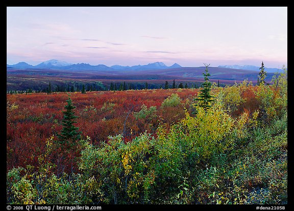 Autumn bushes, tundra, and Alaska range at dusk. Denali National Park (color)
