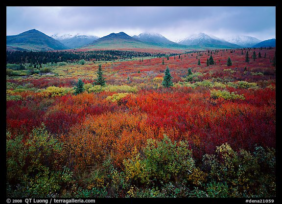 Mosaic of colors on tundra and lower peaks in stormy weather. Denali National Park (color)