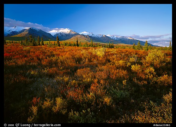 Late afternoon light on tundra and smaller mountain range. Denali National Park, Alaska, USA.