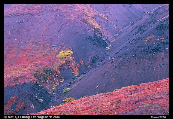 Foothills covered with tundra near Eielson. Denali National Park (color)