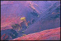 Foothills covered with tundra near Eielson. Denali National Park, Alaska, USA. (color)