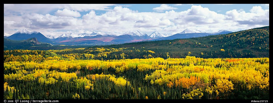 Mountain landscape with aspens in fall color. Denali National Park (color)