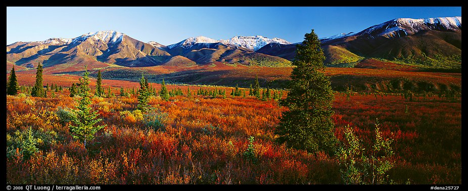 Tundra scenery with trees and mountains in autumn. Denali  National Park (color)