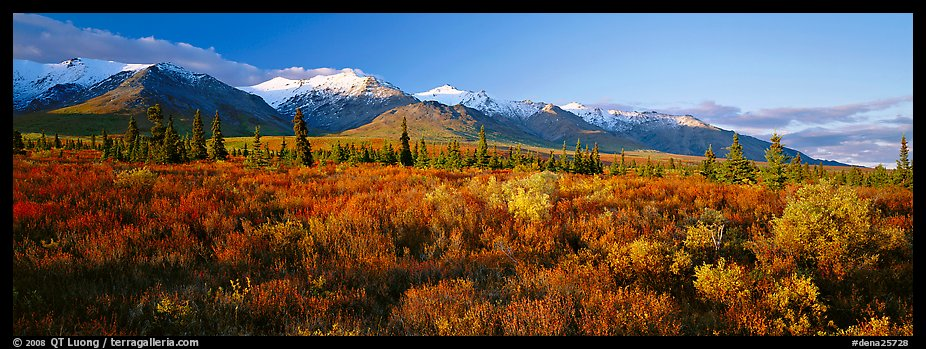 Tundra landscape. Denali National Park (color)