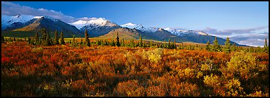 Tundra landscape. Denali National Park (Panoramic color)