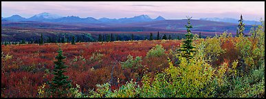 Tundra and Alaska range in autumn. Denali  National Park (Panoramic color)