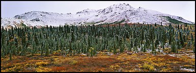Boreal landscape with tundra, forest, and snowy mountains. Denali  National Park (Panoramic color)