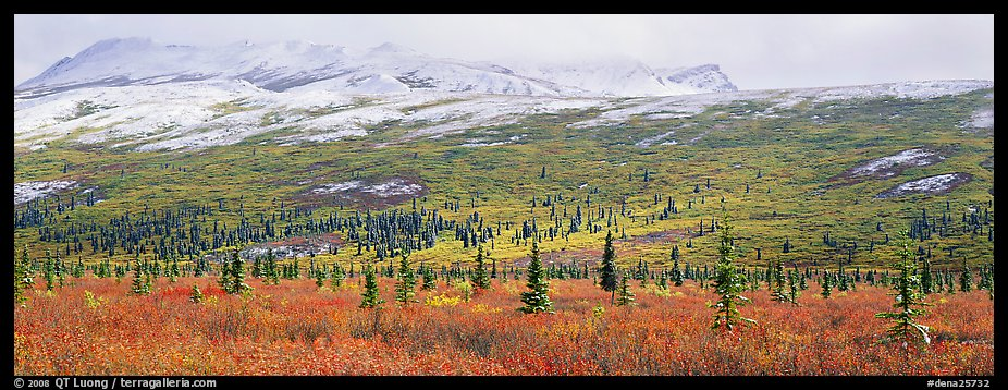 Northern latitudes scenery in autumn. Denali National Park (color)