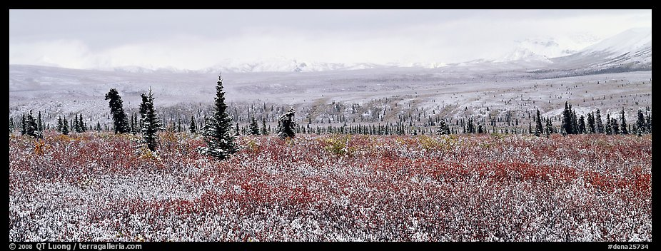 Tundra scenery with early fresh snow. Denali National Park (color)