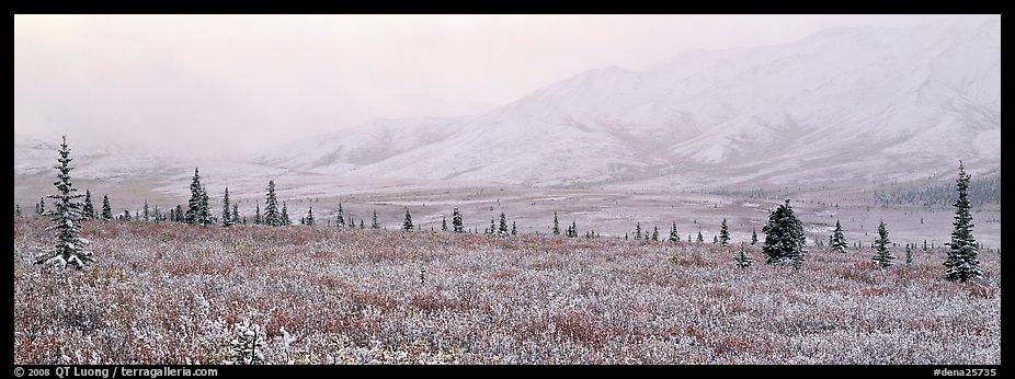 Misty mountain scenery with fresh snow on tundra. Denali National Park (color)