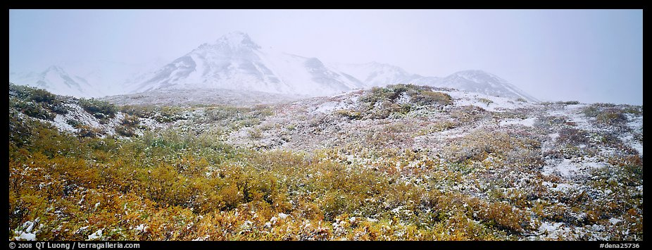 Misty mountain landscape with fresh now and autumn colors. Denali National Park (color)