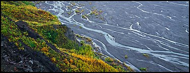Wide braided river and aspens in autumn. Denali National Park (Panoramic color)