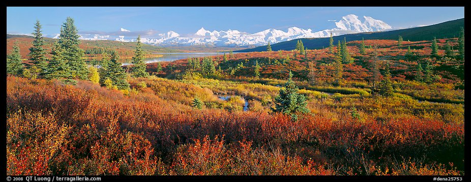Seasons passing on the tundra. Denali  National Park (color)