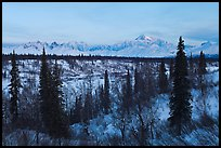 Alaska range and boreal forest in winter. Denali National Park, Alaska, USA.