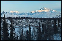 Alaska range peaks rising above forest at sunrise. Denali National Park, Alaska, USA. (color)